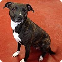 Adopt A Pet :: Sheena - Florence, IN
