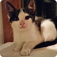 Adopt A Pet :: Lenny - Sparta, NJ