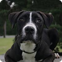Adopt A Pet :: Faith A32006347 - Westampton, NJ