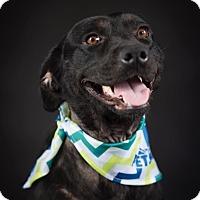 Adopt A Pet :: Pursylane - PORTLAND, ME