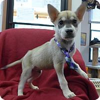 Adopt A Pet :: Timba - Manning, SC