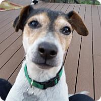 Adopt A Pet :: Penny - McKenna, WA