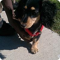 Adopt A Pet :: Francesca (Franky) - Ogden, UT