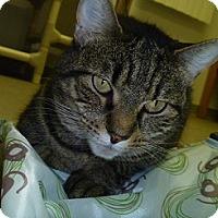 Adopt A Pet :: Cinnamon Stix - Hamburg, NY