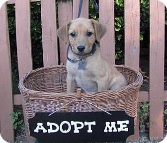 Labrador Retriever/Hound (Unknown Type) Mix Dog for adoption in Mountain Home, Arkansas - Melissa