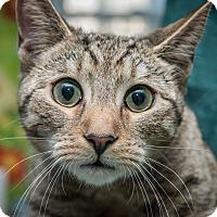 Adopt A Pet :: Ricky - New York, NY
