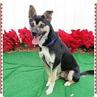 Adopt A Pet :: WINSTON - Marietta, GA