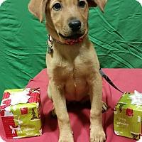 Adopt A Pet :: Cameron-Adopted! - Detroit, MI