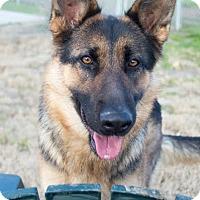 Adopt A Pet :: Merlot - Walnut Creek, CA