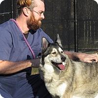 Adopt A Pet :: Sadie - Baltimore, MD