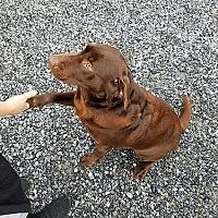 Adopt A Pet :: Katrina - Buckeystown, MD