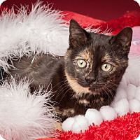 Adopt A Pet :: Blue - Dallas, TX