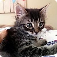 Adopt A Pet :: Kittredge 1 - Austin, TX