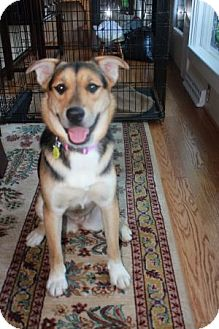 German Shepherd Dog Mix Dog for adoption in Greeneville, Tennessee - Tara