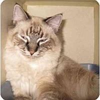 Adopt A Pet :: Simon - Mesa, AZ