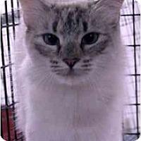 Adopt A Pet :: London - Davis, CA
