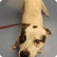 Adopt A Pet :: Ace - Gainesville, FL