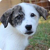 Adopt A Pet :: Napa - Hagerstown, MD