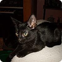 Adopt A Pet :: Luna - Kirkwood, DE