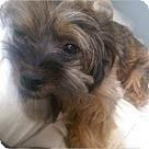 Adopt A Pet :: Agustus