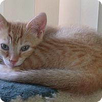 Adopt A Pet :: PAUBLO - Acme, PA