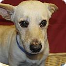 Adopt A Pet :: Dash