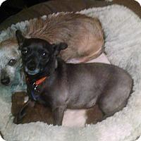 Adopt A Pet :: Lena - Simi Valley, CA
