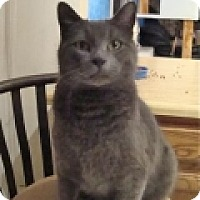 Adopt A Pet :: George - Colorado Springs, CO