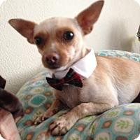 Adopt A Pet :: Chiquito - Las Vegas, NV