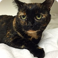 Adopt A Pet :: Chica - Mission Viejo, CA