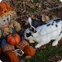 Adopt A Pet :: Spots - Warwick, NY
