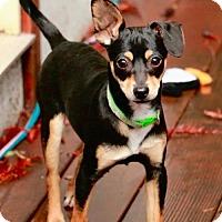 Adopt A Pet :: Candy: Twix - Palo Alto, CA