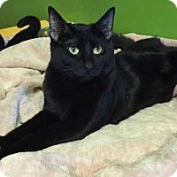 Adopt A Pet :: Wheezie - Topeka, KS