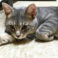 Adopt A Pet :: Bobby - Merrifield, VA