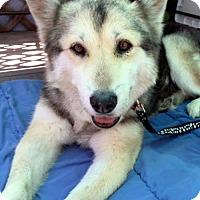Adopt A Pet :: Selina - San Diego, CA