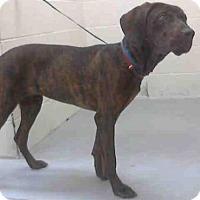 Adopt A Pet :: HERBERT - Conroe, TX