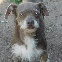 Chinese Crested Mix Dog for adoption in Pipe Creek, Texas - Bootsie