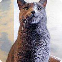 Adopt A Pet :: EMILY - Toledo, OH