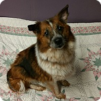 Adopt A Pet :: Possum Lynn - Lisbon, OH