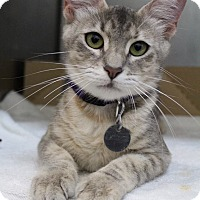 Adopt A Pet :: Pomegranate - Bradenton, FL