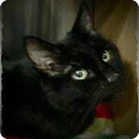 Adopt A Pet :: Lucinda - Pueblo West, CO