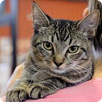 Adopt A Pet :: Audrie - Sarasota, FL