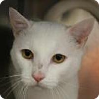 Adopt A Pet :: Milo - Huachuca City, AZ