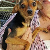 Adopt A Pet :: Ali (Allison) - Baileyton, AL