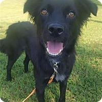 Adopt A Pet :: Lisa Marie - Raleigh, NC