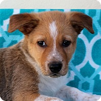 Adopt A Pet :: Jeepers - Los Angeles, CA