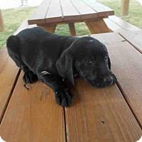 Adopt A Pet :: A009626 - Rosenberg, TX