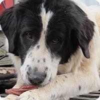 Adopt A Pet :: Marvel - Kiowa, OK