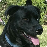 Adopt A Pet :: Handsome - Bradenton, FL