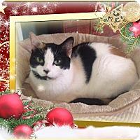 Adopt A Pet :: Emma - Richmond, VA